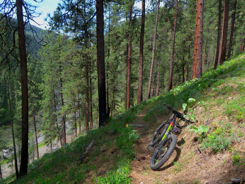 Mountain biking the Wikiup Creek Trail.