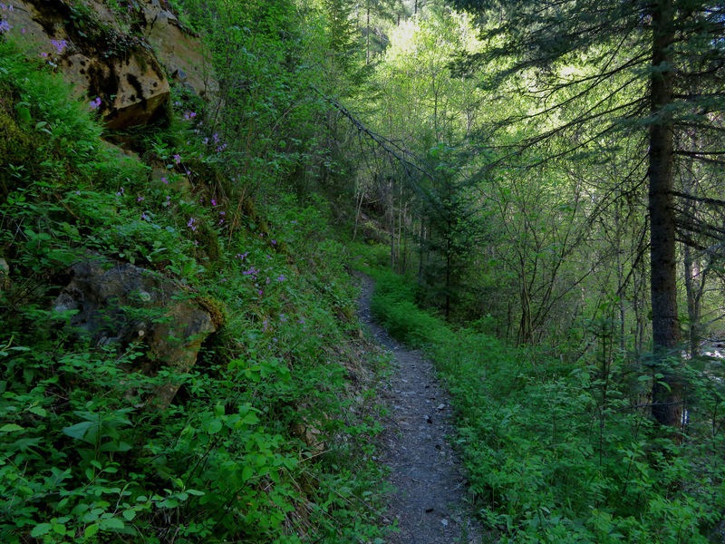 The Cougar Creek Trail follows the creek for about half a mile before climbing up the ridge.