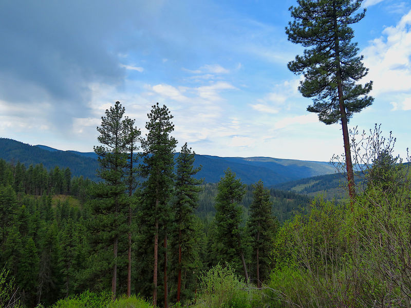 The Cougar Creek Trail offers scenic views near the top of the ridge.
