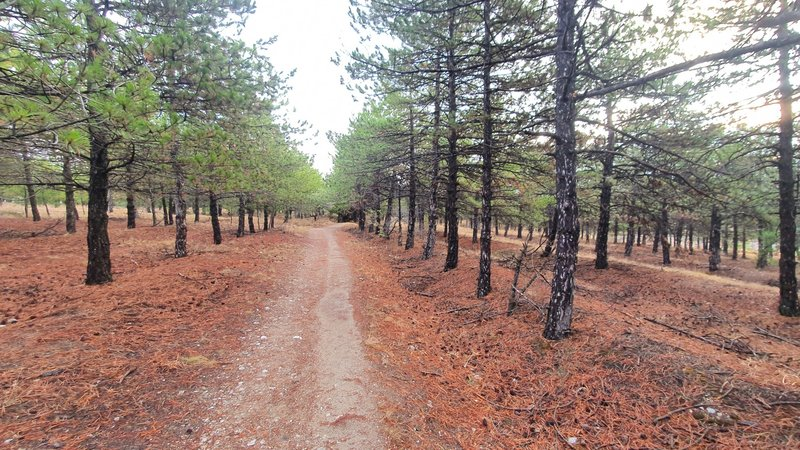 Running northeast through a trail between trees.