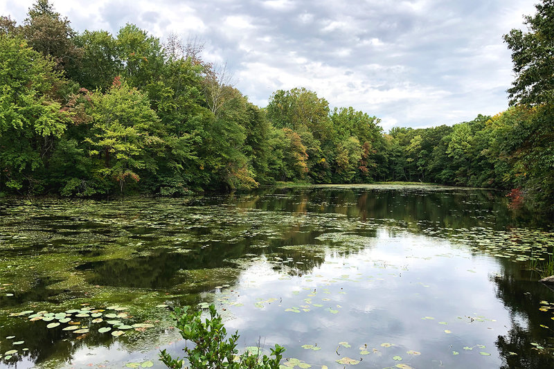 South Pond as seen from the White Trail.