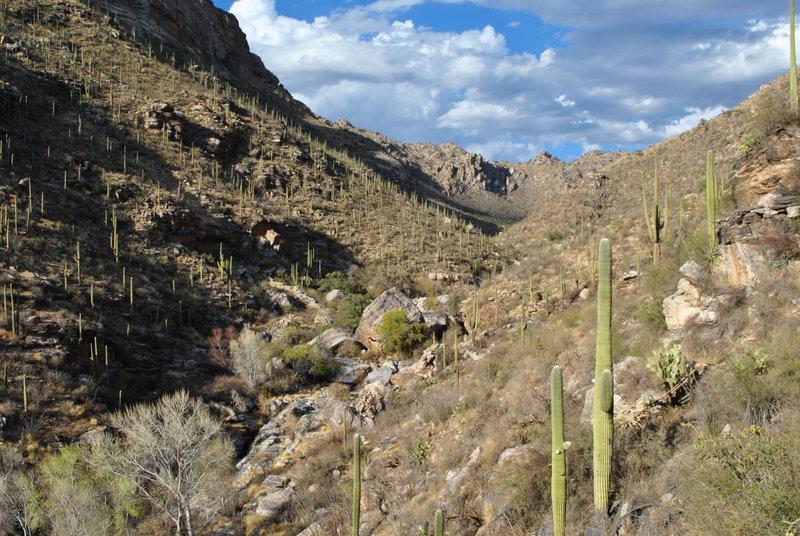 Looking NE into Bear Canyon