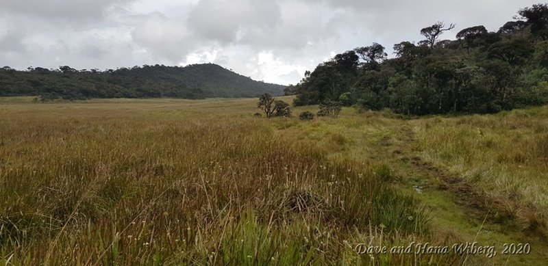 Horton Plains on the hike to Kirigalpoththa.