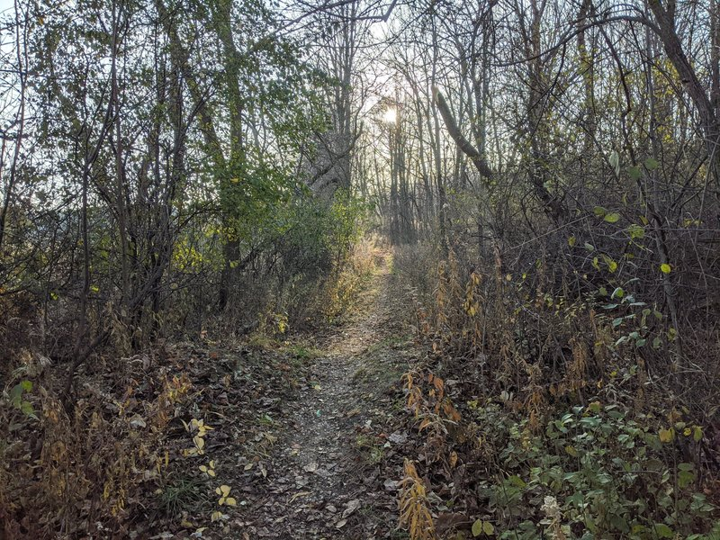 Singletrack section at the west end of the trail.