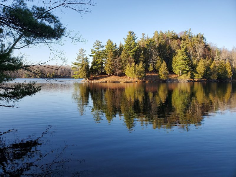 Forested peninsula jutting into Gould Lake.