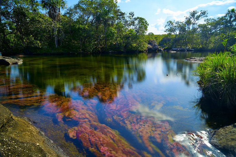 """Swimming hole """"Caño Cristales"""" by szeke is licensed under CC BY-SA 2.0"""