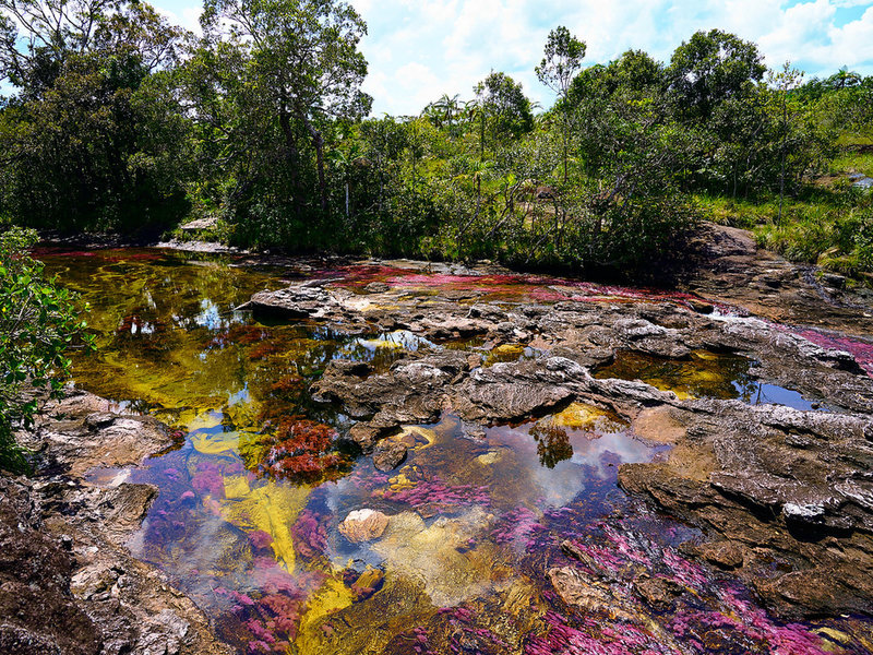 "Showing off the colors of the river ""Caño Cristales"" by szeke is licensed under CC BY-SA 2.0"