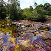 """Showing off the colors of the river """"Caño Cristales"""" by szeke is licensed under CC BY-SA 2.0"""
