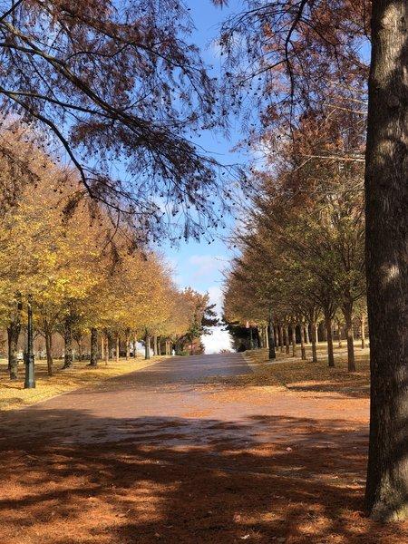 University of Arkansas in Autumn.