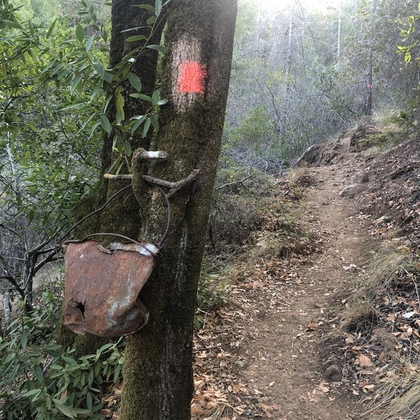Tree spray painted as trail marker.