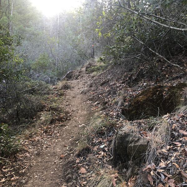 Craig Clark Trail.