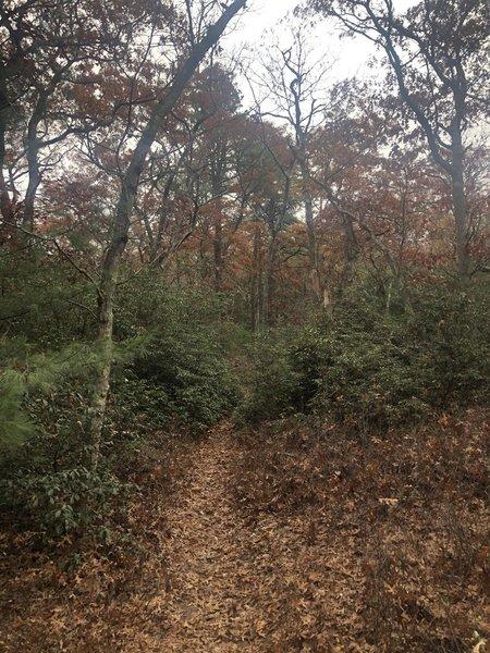 Duval Trail (Blue)
