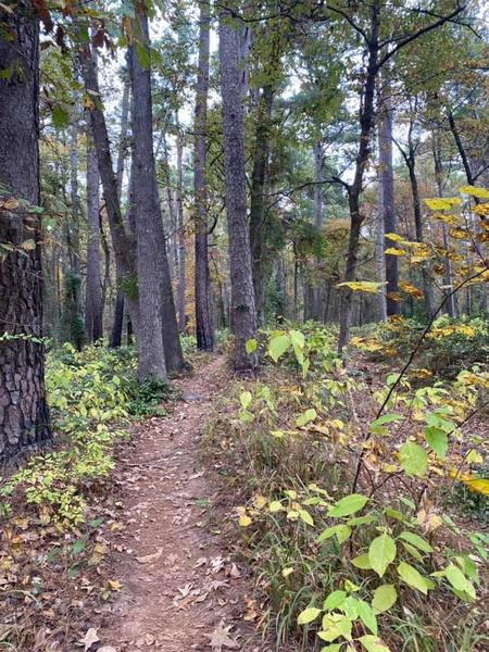 Whispering Pines trail at Tyler State Park.