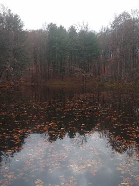 Large pond along Pond Trail