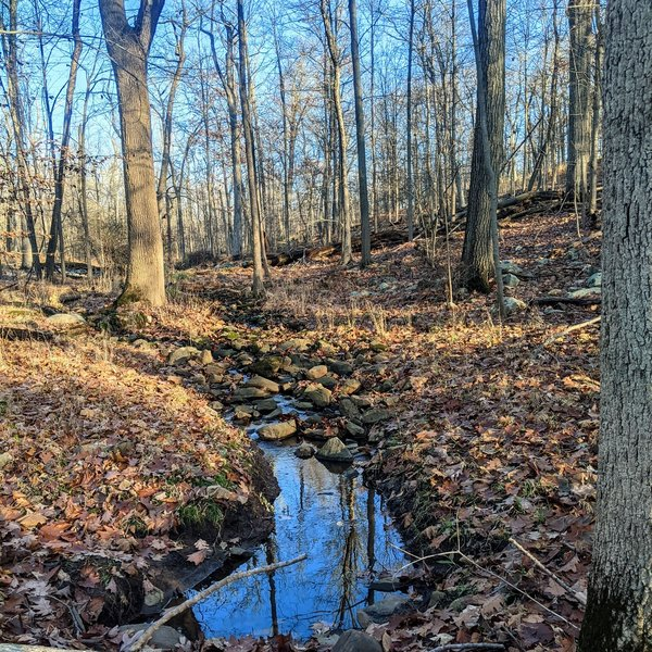 A small stream crosses under the path on the Mayapple Trail. The trees have all dropped their leaves by mid-November, so the area looks a little sparse and wide open.