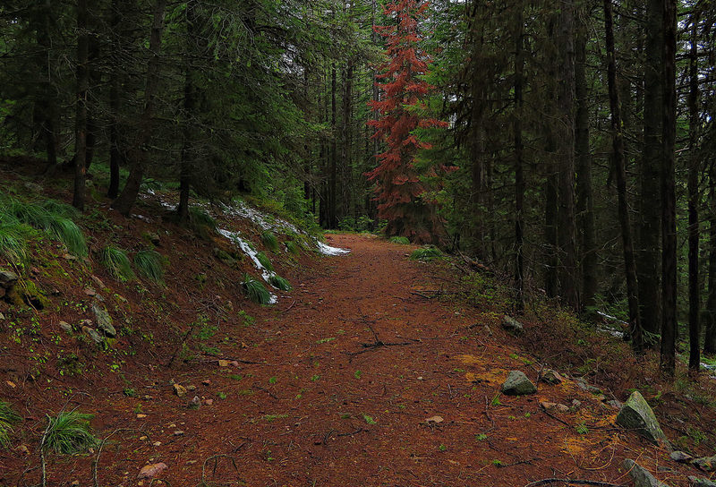 The Marble Creek Trail follows American Creek Road for a short distance.
