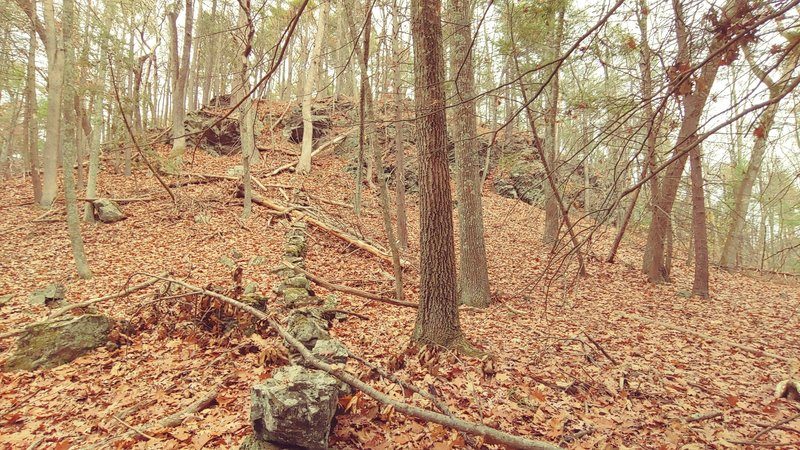 Rock wall, trees and leaves