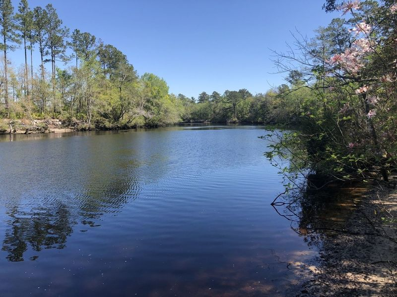 St Mary's River on Ralph E Simmons Memorial State Forest
