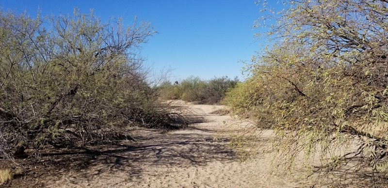 Typically sandy where the trail crosses the dry wash.