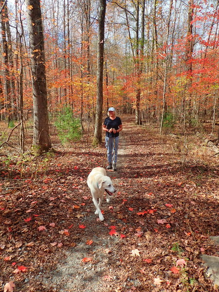 Well maintained trails with beautiful fall colors.