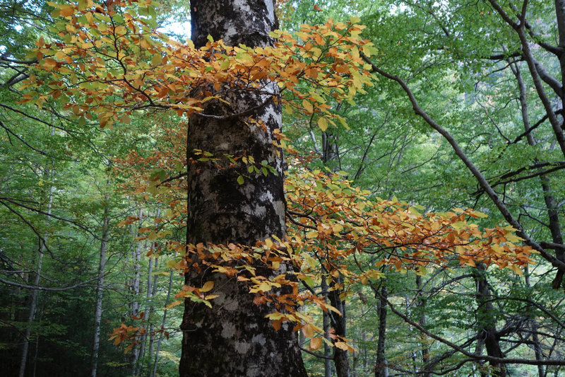 Spiral of autumn leaves under a beech forest canopy.