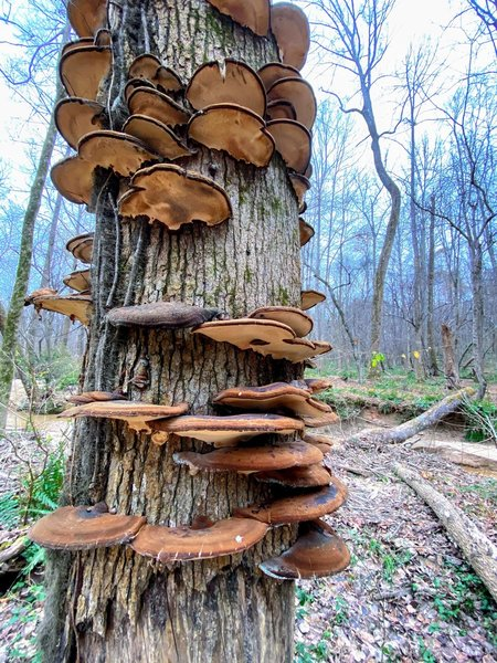 Mushroom spiral staircase.