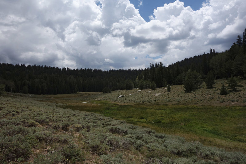 Meadow and sage near Timber Creek, under a moody sky.