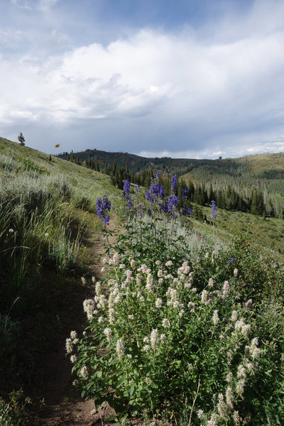 Wildflowers and a butterfly along the Mt Nebo Bench Trail