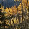 Autumn glory of aspen filtered sunlight on the Gavilan Trail.