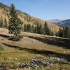 Alpine meadow stream near the top of the Gavilan Trail.