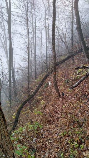 Hiking along the ridge of Hospital Rock Trail.