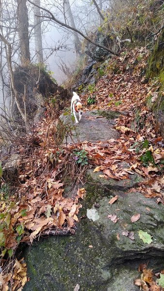Descending rock features commonly found on this trail.
