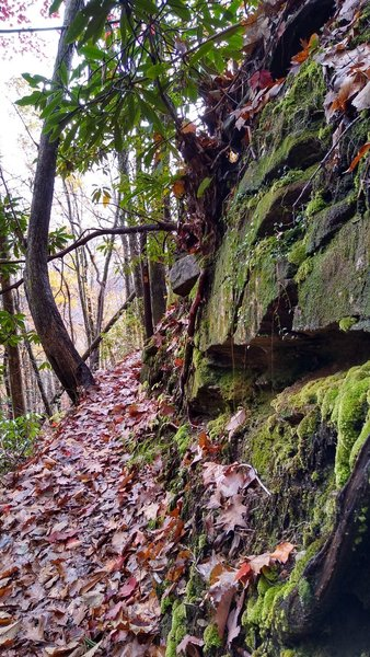 Moss covered rock wall along the trail.