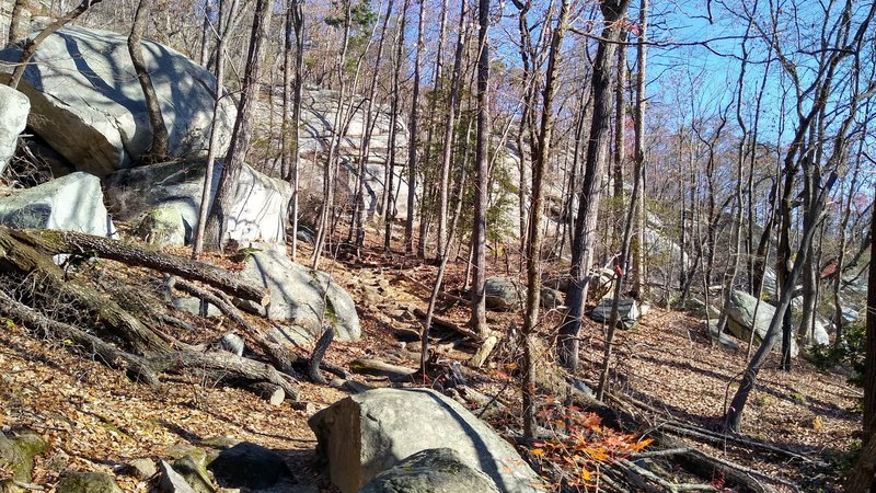 Boulders strewn about the forest along the trail.