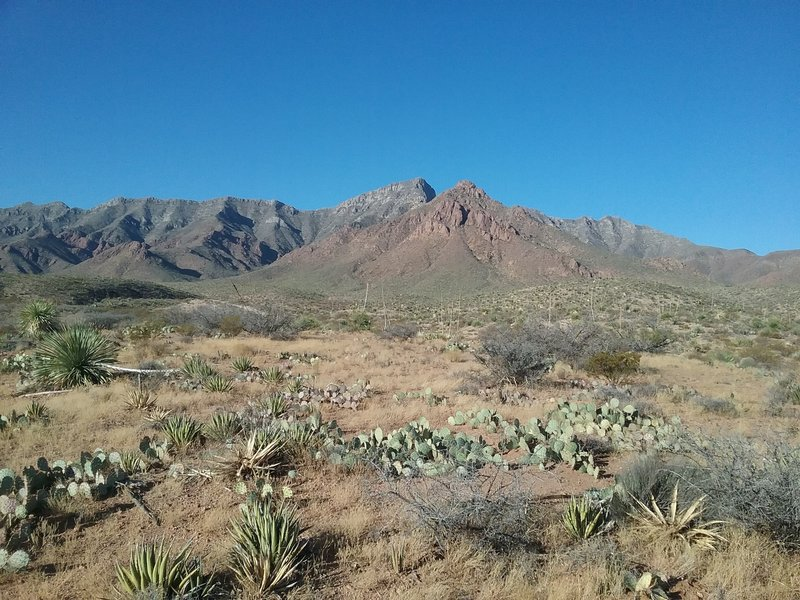 View of  Franklin Mountains from the trail.