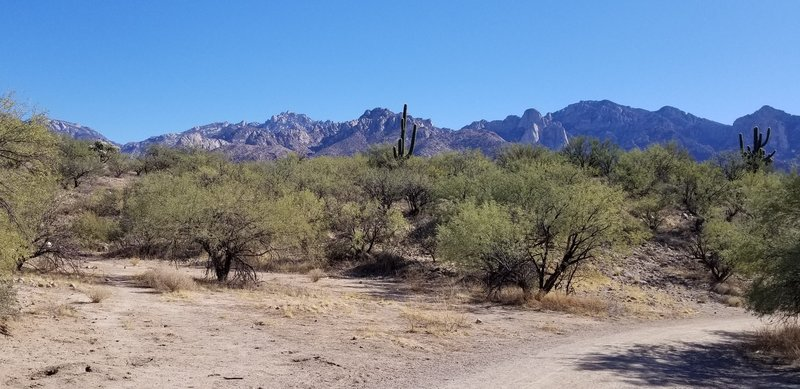 Looking east at the Catalina Mountains with the trail curving to the right; the entire trail is clear and wide.