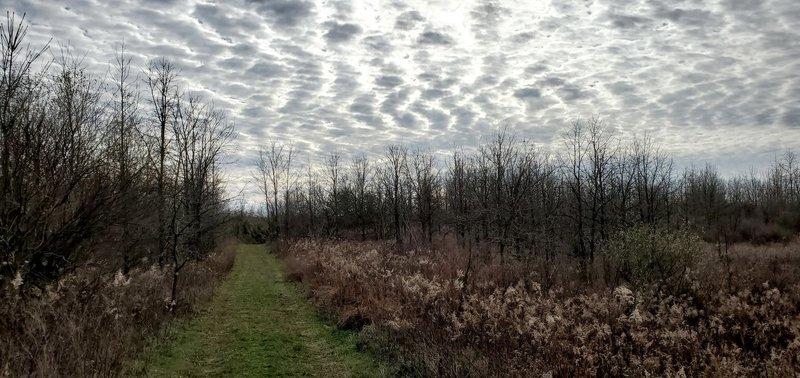 Trail mowed through reclaimed mine ground.
