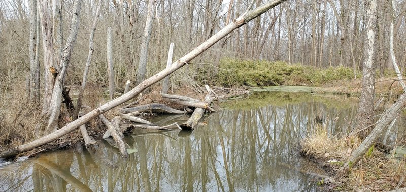 Old oxbow of the Patoka River