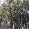 Oak savvana transistions to fir forest.