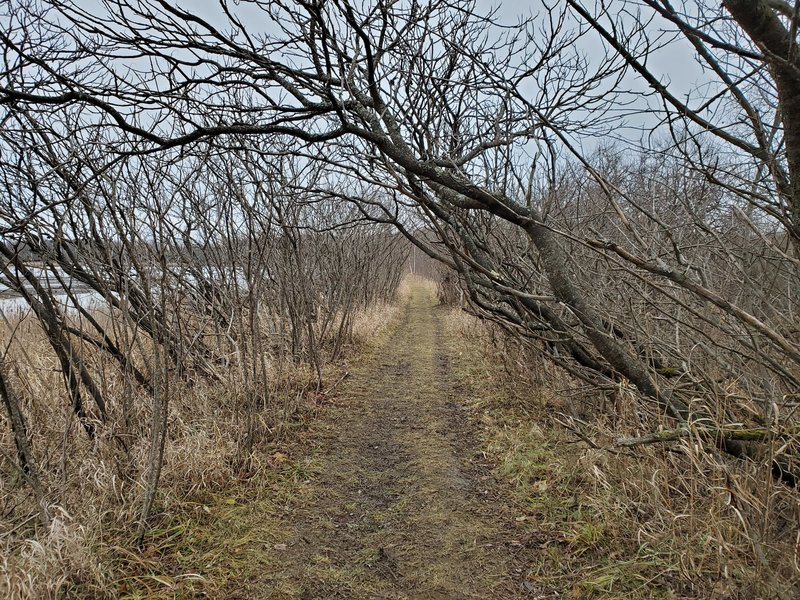 Trees growing over path