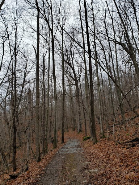 Forested trail in early winter