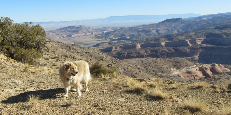 A dashing view with my friend's dog Dash.