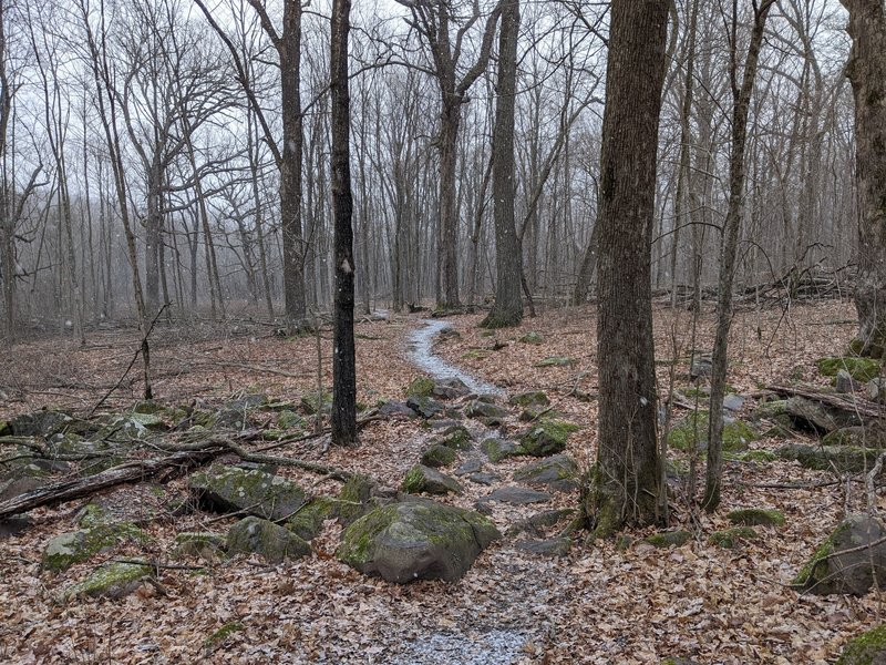 The trail with one of many rocky sections.