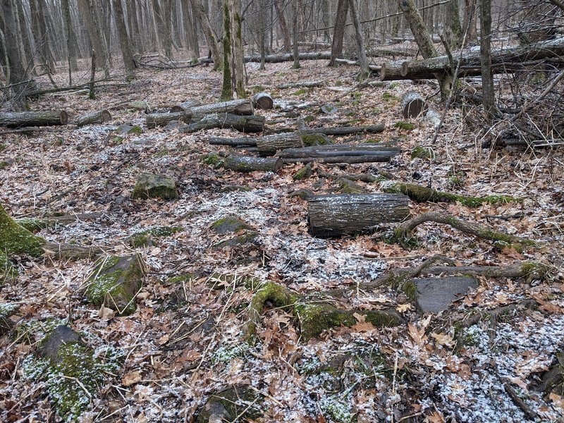 A muddy and rocky section of trail with random logs, quite a few sections like these.