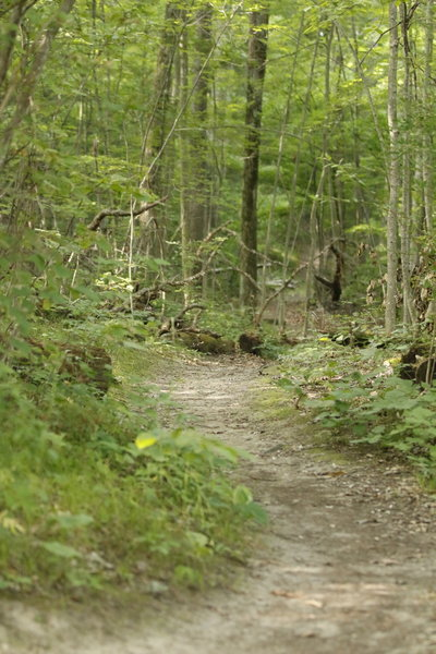 Lakeshore Trail peninsula singletrack is a peaceful hike and run.