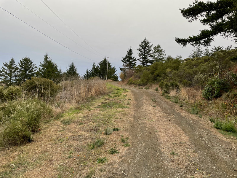 The trail follows an old farm road that mother nature is slowly reclaiming.  You may be walking on dirt, grass, gravel, or cement at various moments in the hike.