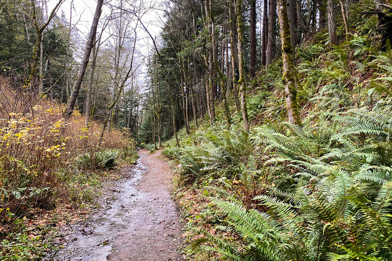 While not overly muddy, the trail can be a bit wet if it's been raining recently.