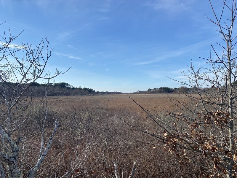 View southwest from trail into wetlands