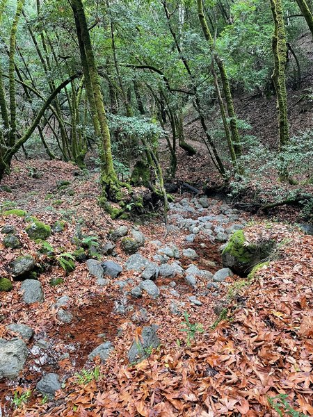 The trail following Los Trancos Creek.
