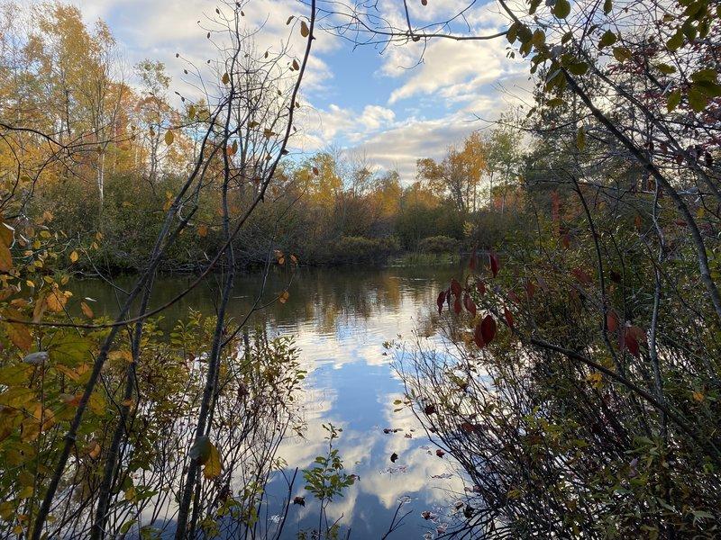 Betsie River Fall 2020